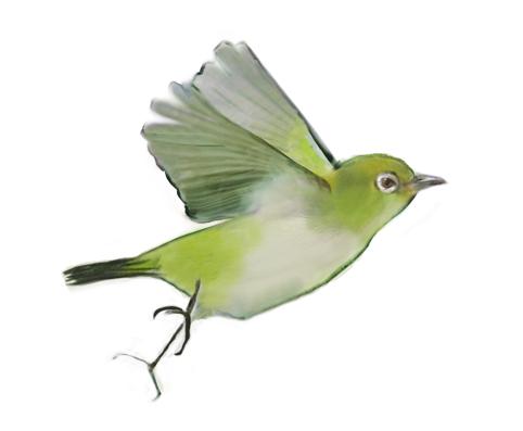 MARIMO-Mejiro-Fliegend
