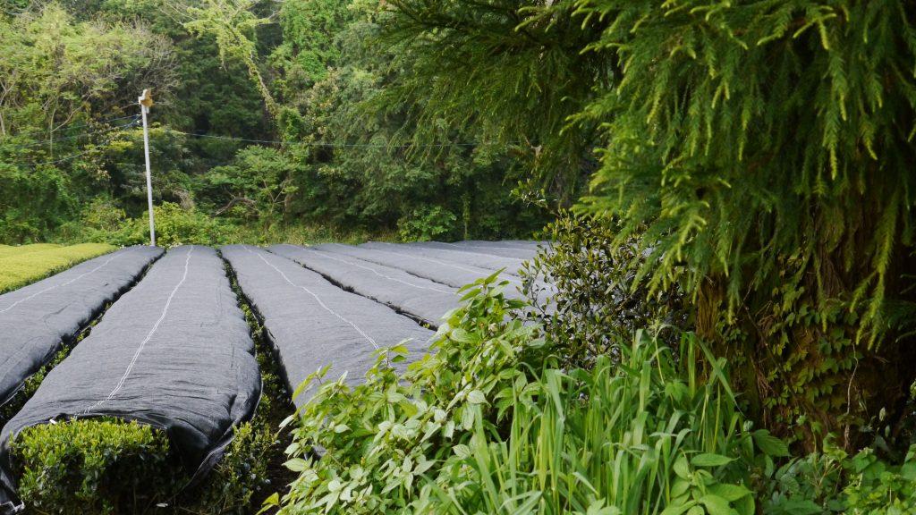 Mishou-Teegarten für Kirishima Aracha Shincha