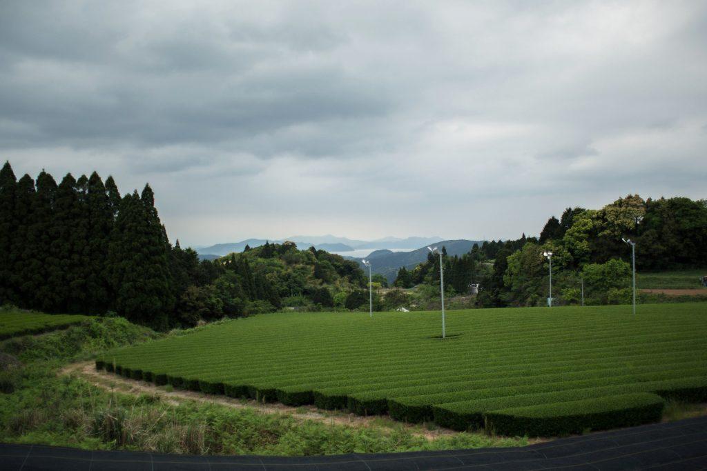Fernblick in der Nähe vom Teegarten Sakura-No En