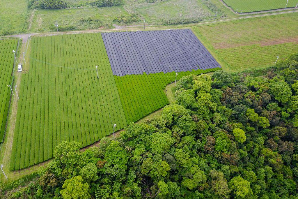 Luftaufnahme des Teegartens von Haruyo und Shigeru Morimoto