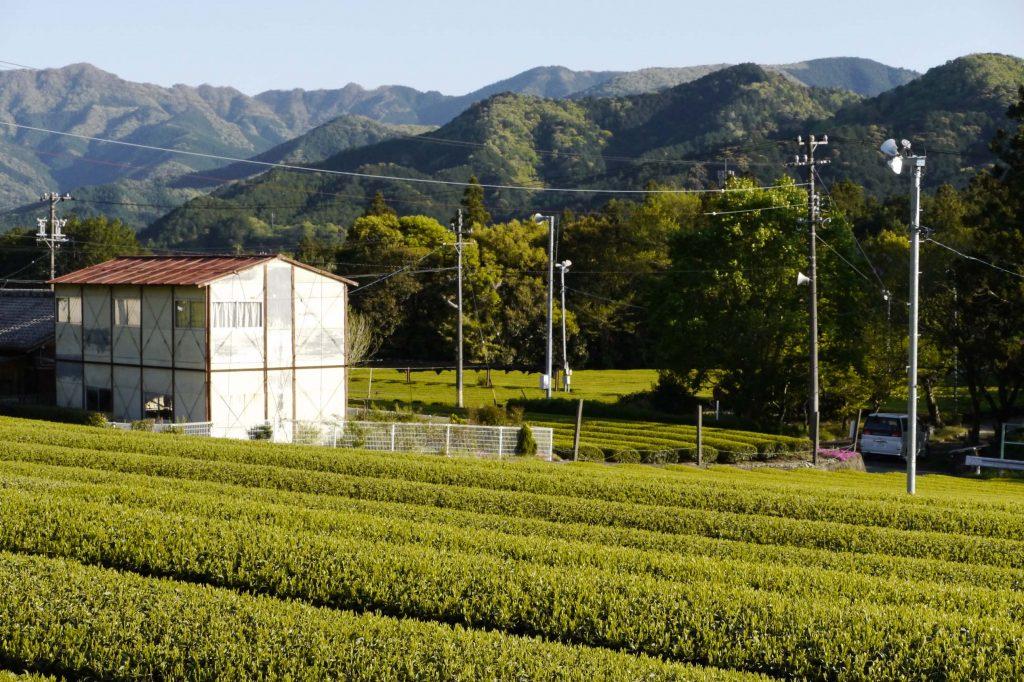 Teegarten von Kimihiko und Iwao Hayashi