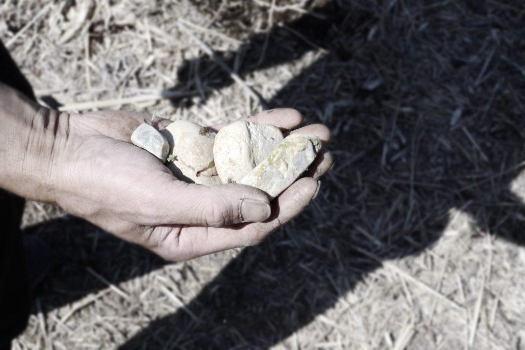 Gestein im Boden eines Suikyo Teeberges: ein ehemaliges Flussbett
