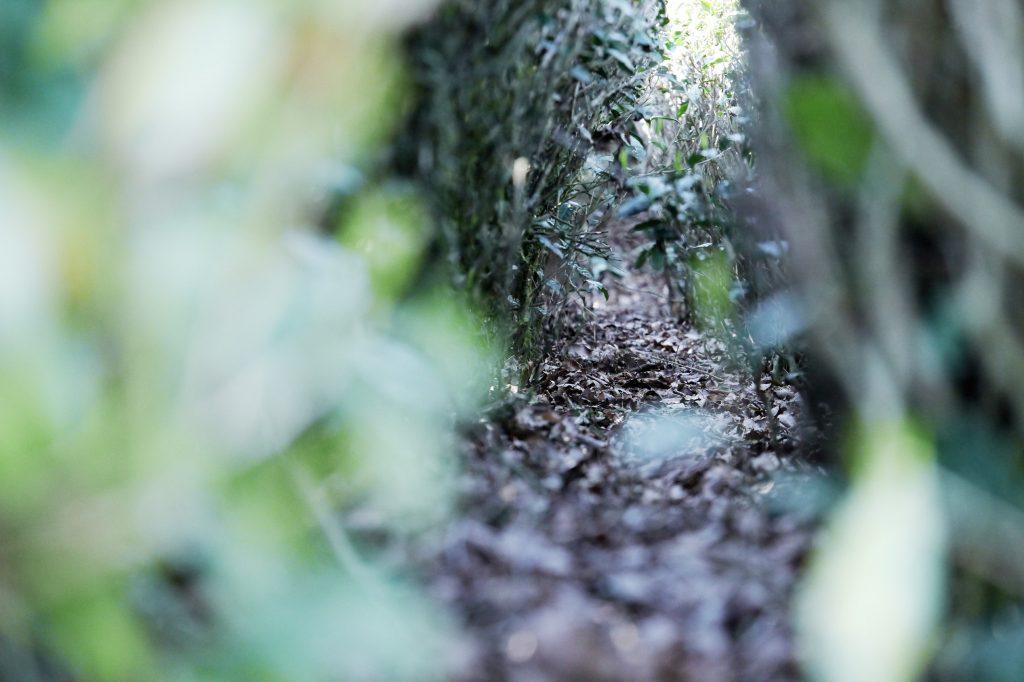 Gras-und Laub Düngung im Suikyo Teegarten