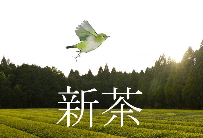 Japan Shincha 2019