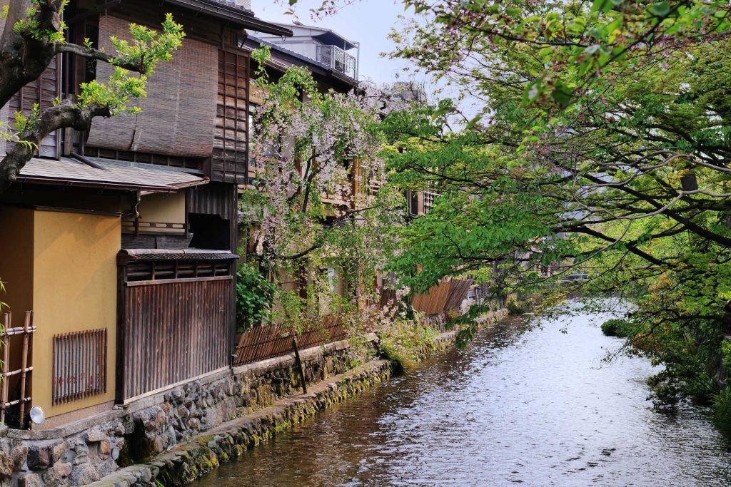 Sakura-Blüten am Flußufer in Gion, Kyoto