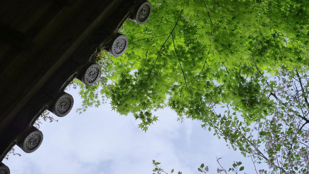 Ausblick von einer ruhigen Tempeltreppe