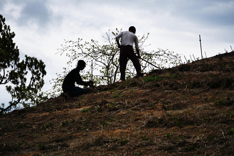 Helfer räumen schützende Äste vom 2018 neu angelegten Teeberg