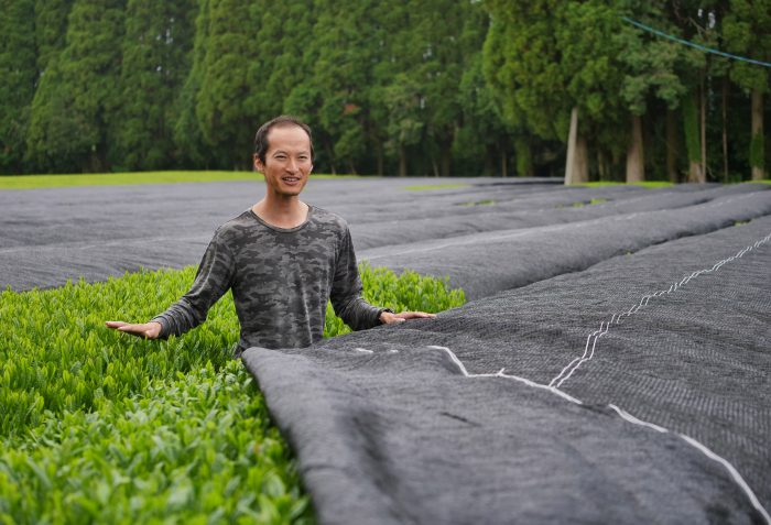 Shutaro Hayashi in seinem Asanoka Teegarten in Kirishima. Morgen beginnt hier die Ernte.