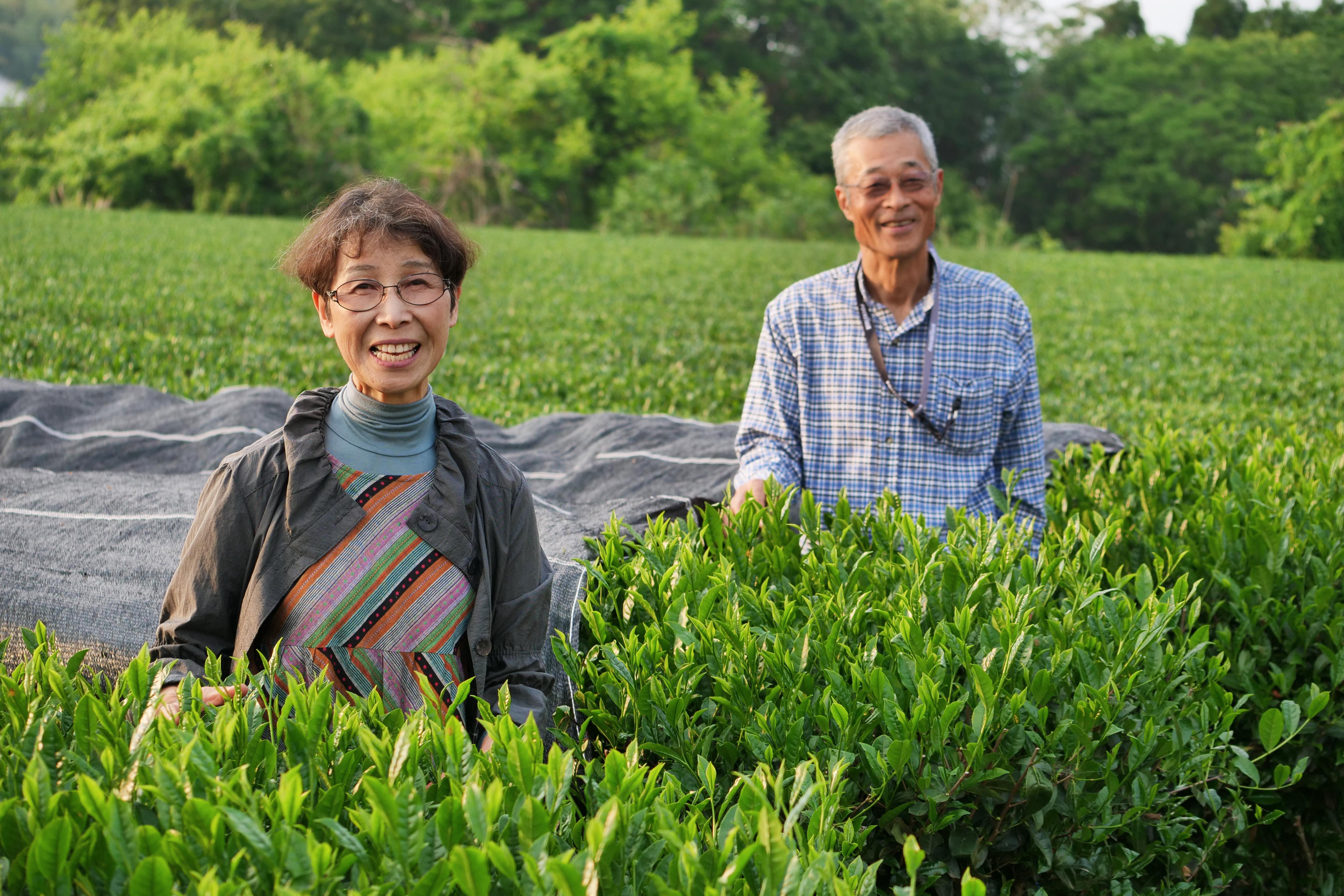 Haruyo und Shigeru Morimoto in ihrem Teegarten in Miyazaki