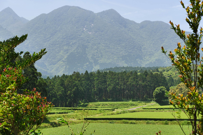 Teegarten von Mankichi und Keita Watanabe auf der Insel Yakushima
