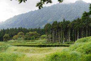 Watanabe Teegarten