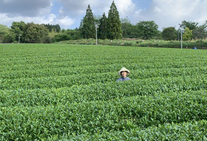 Haruyo Morimoto im Yutaka Midori Teegarten
